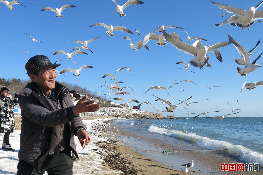 .大连69岁老人义务喂海鸥6年