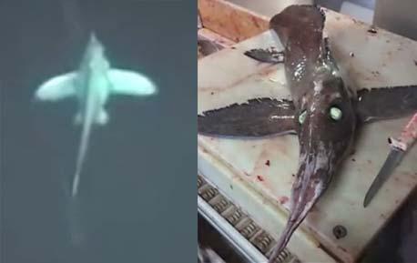 可怕深海鱼眼睛发光长翅膀 疑史前巨兽