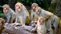 有关猴子的动物世界