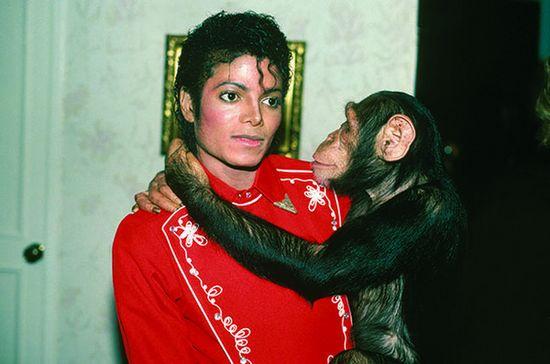 [明星爆料]传迈克尔·杰克逊生平将拍成动画片 以黑猩猩口吻描述