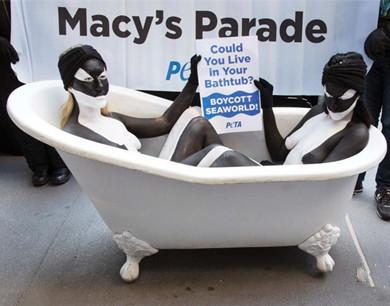 美动物保护者坐浴缸扮虎鲸 抗议海洋世界花车游行