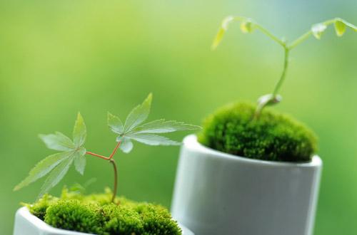 职场风水:办公室植物挑选有讲究