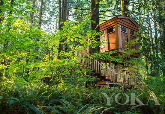 国际旅游岛 景点 > 正文   如果足够幸运,居住在树屋酒店的你可以足不
