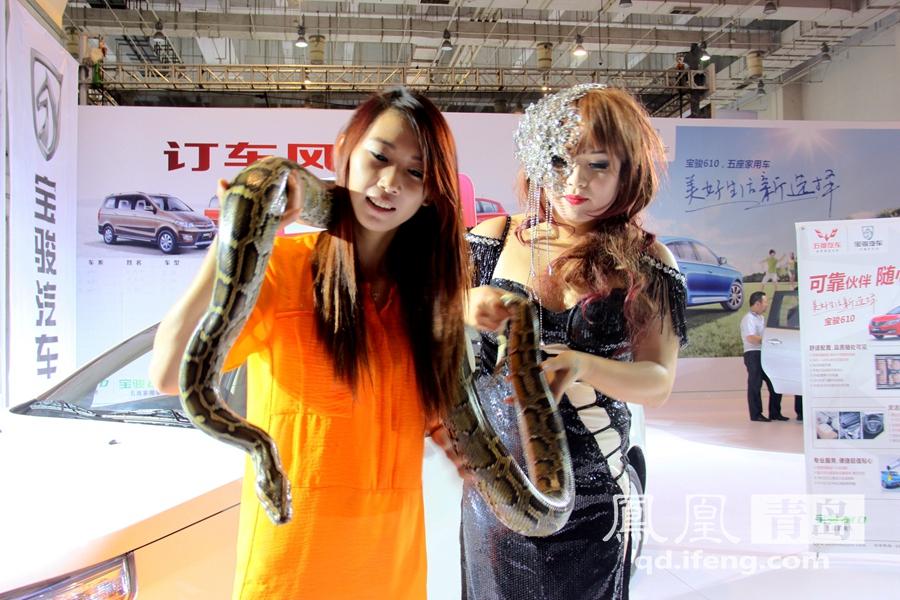 男模抢镜美女大玩蟒蛇