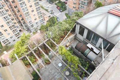 玉海大厦8层楼顶平台上的违建,上面栽有树木、绿植、瓜蔓等,还搭有凉棚