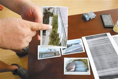 一业主出示拍摄违建上栽种绿植的照片