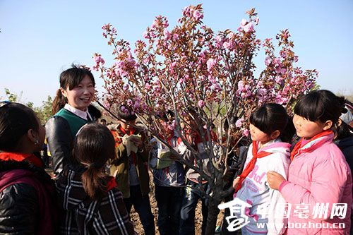 蒙城亳州小学生樱花园里上自然课小学洪园图片