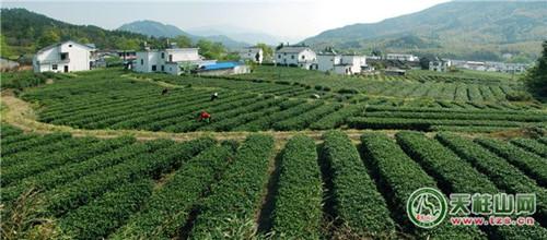 """""""黄梅戏的前身是采茶戏,源于皖鄂一带的采茶调,现在的天柱山茶歌具有图片"""