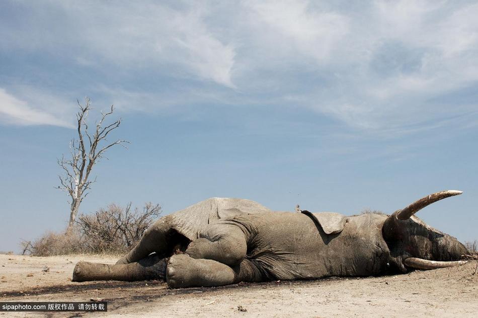 """津巴布韦动物园的""""大象危机"""""""