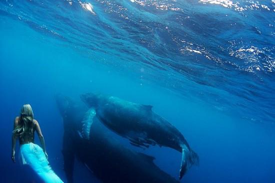 海底惊现真人版美人鱼 与鲸鱼在水下嬉戏图片