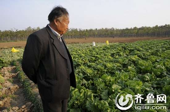 """""""大白菜之王""""赵新坤在他的大白菜实验基地src=""""http://y1.ifengimg.com/bedfa3788a92f5ae/2013/0422/re_5174dca2c50b1.jpg"""""""