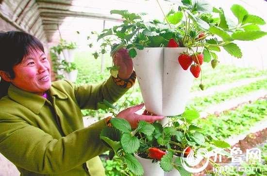 """都市型现代农业成为郭店镇农业发展的一大特色src=""""http://y1.ifengimg.com/bedfa3788a92f5ae/2013/0422/re_5174dca82dbc2.jpg"""""""
