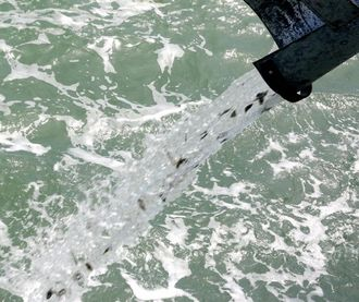 百万育苗放生记 山东省投入亿元发展海洋渔业