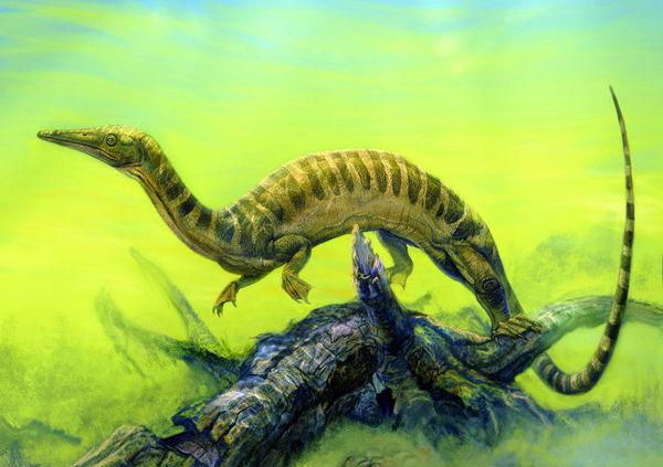 比如安顺龙是浅海的爬行动物