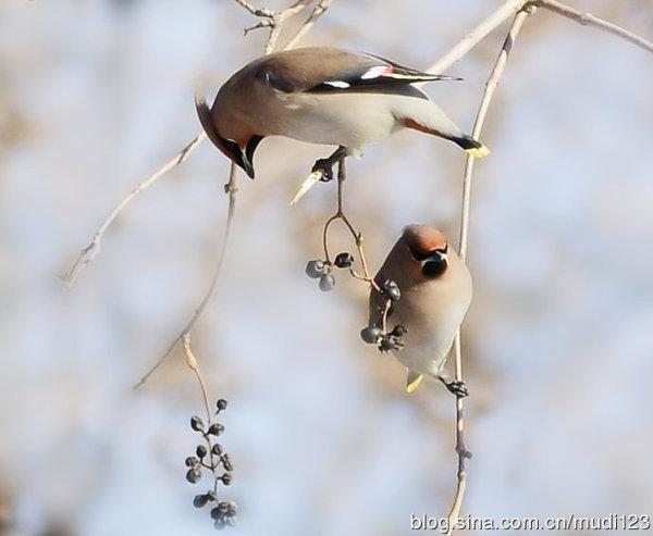 2012年12月30日 -  光风霁月的博客