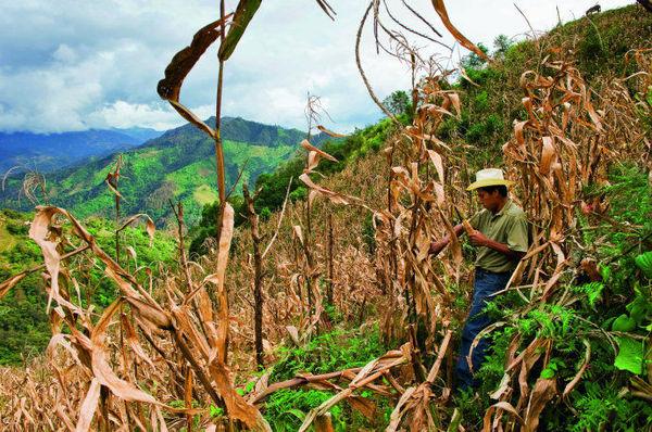 """同其他地区的""""酒文化"""",""""茶文化""""一样,墨西哥人种玉米久了自然也就图片"""