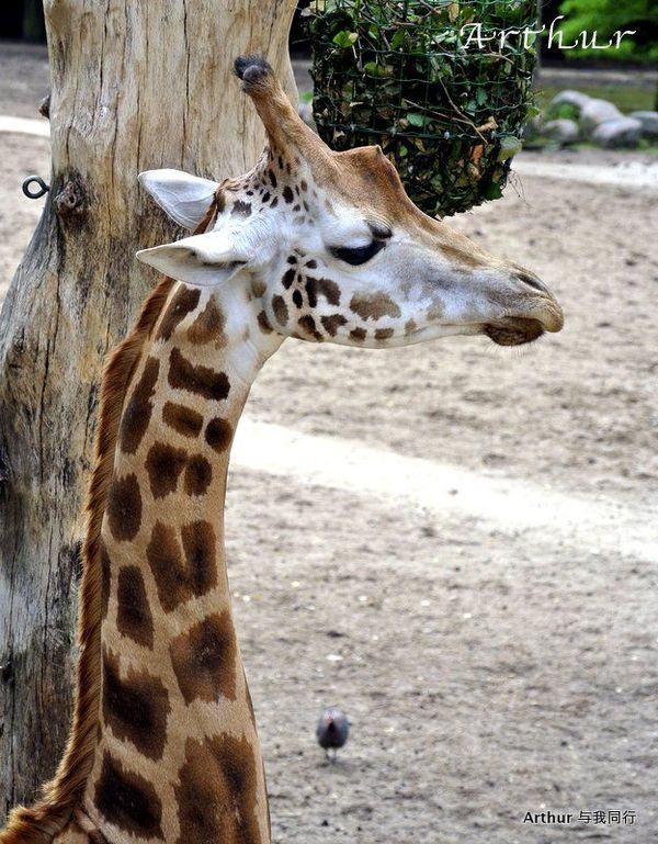 【荷兰】荷兰孩子超喜欢的动物园
