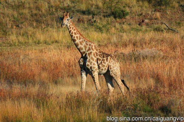 狂野南非:去野生动物保护区追踪野性动物!