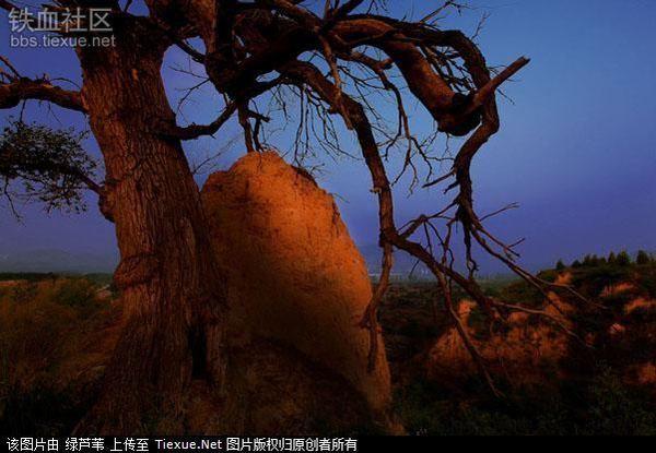 林子大了,什么奇葩都有——盘点国内外的怪树(组图) - 月落台阁 - 月落台阁