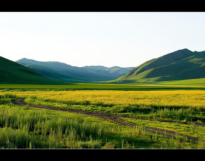 成为夏季呼伦贝尔大草原一道最美的风景线,煞是漂亮.