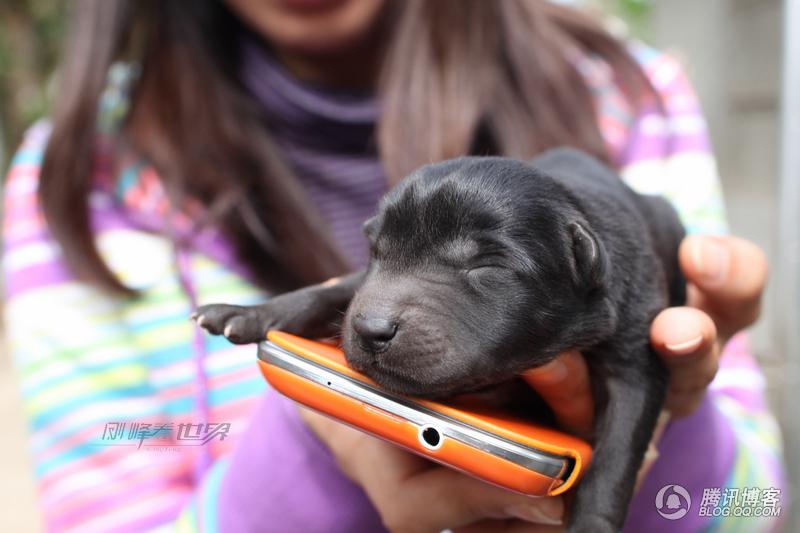 偶拍刚出生三天的可爱小狗狗