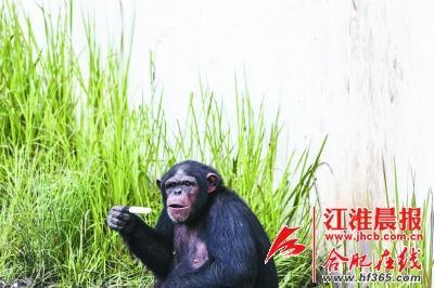 合肥野生动物园防暑有妙招