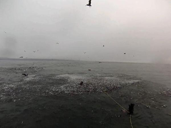 """大量沙丁鱼跃出水面,""""猎手""""正在水下准备捕食."""