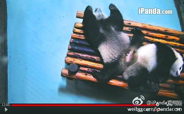 设计 直播/注意睡姿,全球直播哟!(设计台词) 熊猫频道视频截图