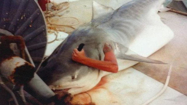 纹身 鲨鱼/英国《每日邮报》7月31日刊登了一张看上去十分血腥的照片,...