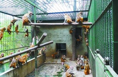 """南京红山动物园改造 猴山78只猴子""""搬家"""""""