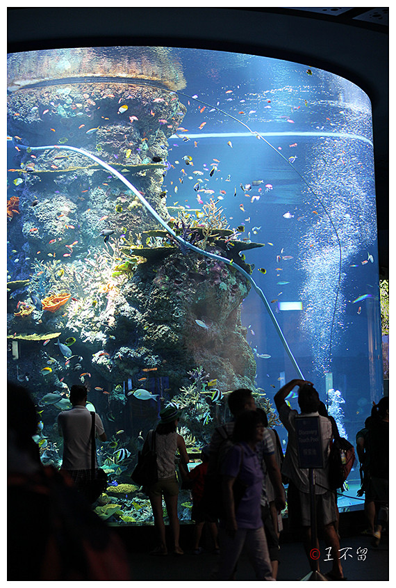 新加坡:全球最大的海洋水族馆s.e.a.