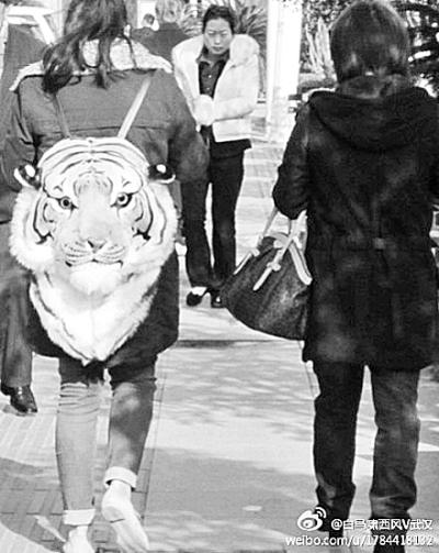 发现一只老虎头正