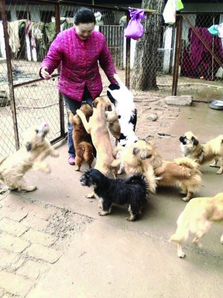 一见到郝桂珍,院子里的狗狗就高兴地往她身上扑图片来自QQ群济南流浪狗救助护生 经历了5次搬家,今年已经61岁的郝桂珍女士最终将流浪狗新家选在仲宫镇西郭村。面对200多条流浪狗庞大的开支,郝女士曾一度绝望。不过从今年开始,一些志愿者的加入,让事情有了转机。大家帮我创建了淘宝账号,通过购买狗粮的方式为我捐钱,同时聘请义务会计帮忙打理账目,保证捐款的使用公开、透明。记者在采访中了解到,不少的流浪狗基地都采用网络加志愿者的线上线下模式,开拓自身生存空间。 记者 李林超 收留200多条流浪狗志愿者建QQ