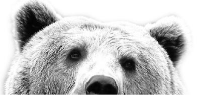 万人围观捕杀动物