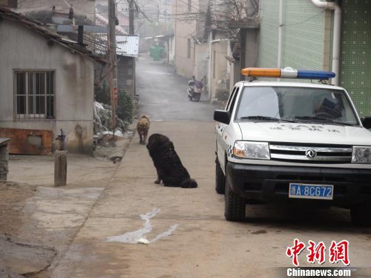 图为出现在桐庐县城南街道的两条大型犬。 桐庐公安 摄