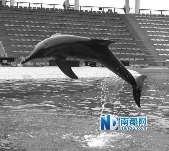 """海豚以546票荣登动物园""""明星动物""""的榜首.通讯员供图"""