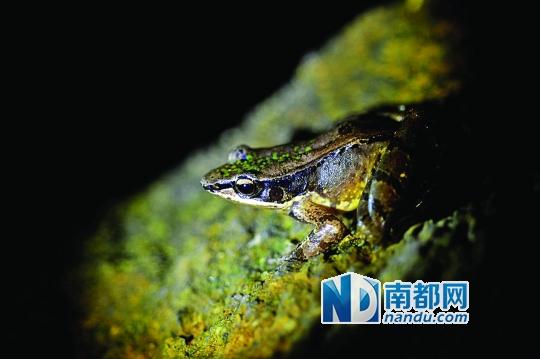 以期了解珍稀濒危国家保护野生两栖爬行动物在罗浮山的分布与生存状况