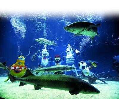 法制晚报讯    今天上午,北京海洋馆潜水员扮成各种海洋生物,在鲟鱼缸