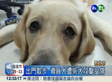 """台北地检署23日依违反""""动物保护法""""和""""刑法""""毁损罪"""