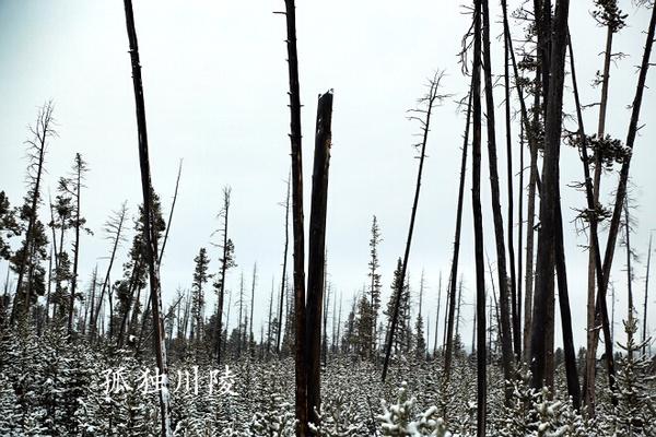 常能看到烧焦的树干