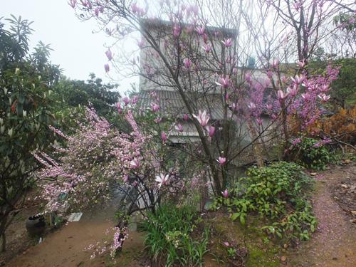 红花绿树掩映的庭院