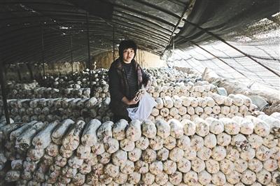 生活 郭家坞村/水库沿岸村庄的蘑菇大棚。