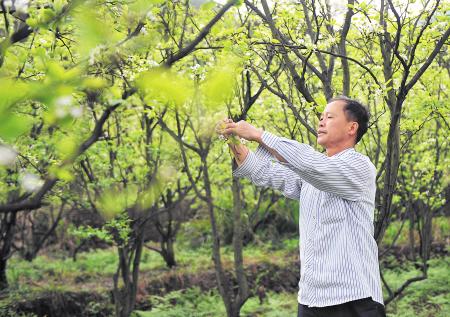 果木树品种大全批发