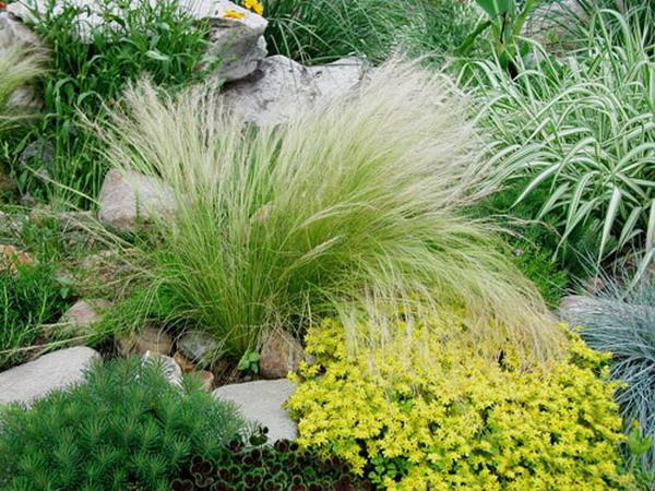 生态:引入一些野生的植物。种一些本土的植物,尽可能选择能丰产及自我循环的植物,少用硬质园景。