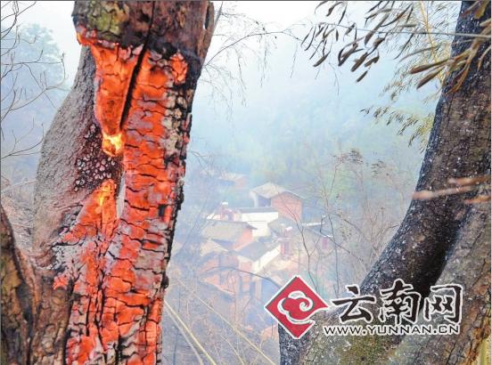 种坟地里的树被烧了