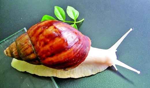 蜗牛剪纸步骤图解大全