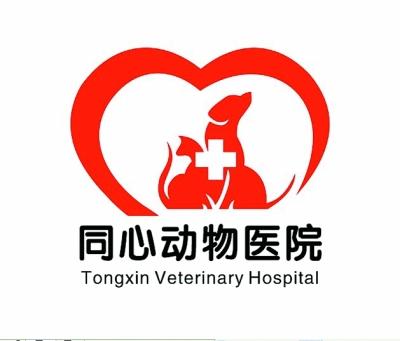 027宠友俱乐部携湖北兽医师协会,武汉市小动物保护协会为流浪猫进行