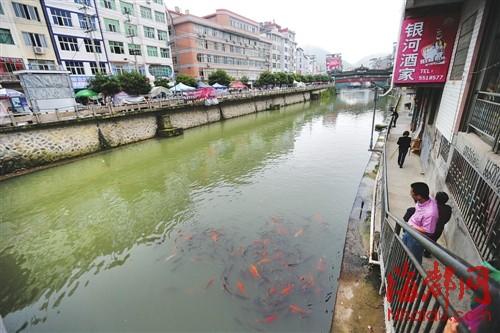 县城中央的廊桥下,锦鲤成群,与人们和谐共处
