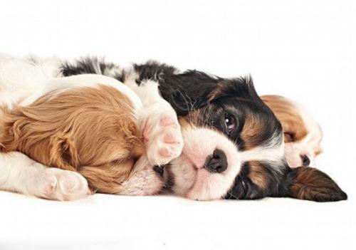 滚动新闻  原标题:美国摄影师拍25种幼犬呆萌讨喜模样   可爱的狗狗