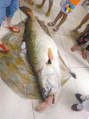折鱼步骤图解